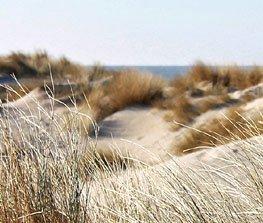 bestemming_nederland_duinen.jpg